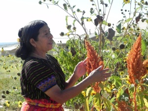 At the Santa Clara Pueblo, an Indigenous woman from Guatemala teaches how to harvest amaranth
